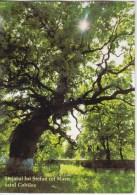 Moldova  Moldavie  Moldau ,  Oak Of Stefan Cel Mare , Used Postcard - Moldawien (Moldau)