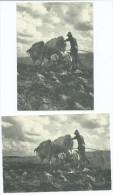 CPM   Lot De 2 Cartes Modernes REPRODUCTION (1) Une Scène De Labourage Vers 1950 Dans Les Bouches Du Rhône -scan R/V - France