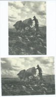 CPM   Lot De 2 Cartes Modernes REPRODUCTION (2) Une Scène De Labourage Vers 1950 Dans Les Bouches Du Rhône -scan R/V - France