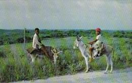 Antigua St Johns Young Boys On Donkeys - Antigua & Barbuda