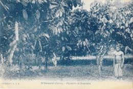 Gabon - N'Gounié - Plantation De Komadeké - Collection C.E.F.A. - Gabon