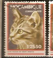 Mozambique (D33) - Mozambico