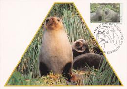Australian Antarctic Territory 1993 Fur Seals Maximum Card - Maximumkarten