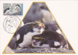 Australian Antarctic Territory 1993 Royal Penguins Maximum Card - Maximumkarten
