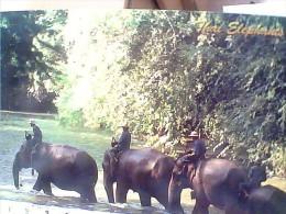 TAILANDIA  ELEFANTI ELEPHANT ATTRAVERSANO FIUME  N1990 EU17786 - Tailandia