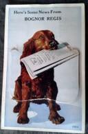 Carte Système BOGNOR REGIS - Here's Some News From... Dog And Newspaper, Chien Et Journal, 12 Mini Vues - Bognor Regis