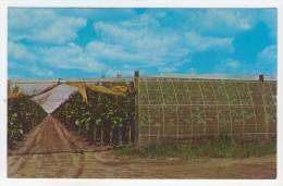 Connecticut         River Valley Tobacco Farm - Sonstige