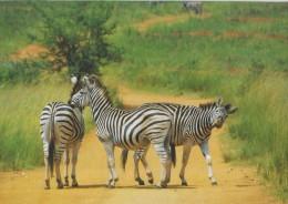 SWAZILAND, MLILWANE, WILDLIFE SANCTUARY  [17696] - Swaziland