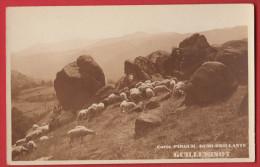 Carte Photo De Moutons  Publicité Guilleminot Pirguil - Pubblicitari