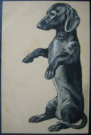 Präge-Lithographie Künstlerkarte Teckel Dachshund Dackel - Hunde