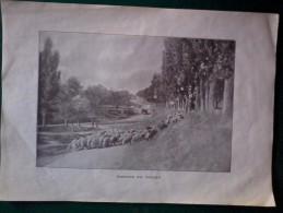 Vecchie Stampe -   Tornando Dal Pascolo. Cm. 17x24. - Vecchi Documenti