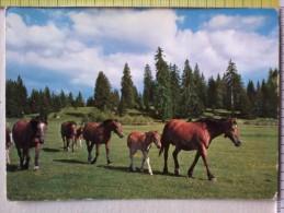 Cart.- Cavalli - N° 5 Cart  Diverse . - Pferde