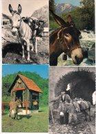 L100B_Anes Lot 02 - 35 Cartes Postales Différentes Toutes Scanées - Donkeys