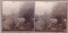 Vue De La Source De Sainte Godelaine Petite Riviere 1925 Pas De Calais  Wierre-Effroy - Stereoscopic