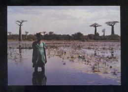 *Jordi Bas - Madagascar, L'Africa Aïllada* Barcelona 2001. Nueva. - Exposiciones
