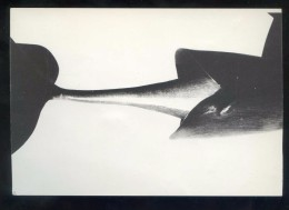 *Imogen Cunningham - Fronteres* Barcelona 1988. Nueva. - Exposiciones