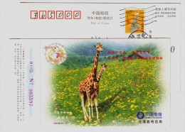 China 2000 Rare Wildlife Animal Pre-stamped Card Giraffe - Giraffes