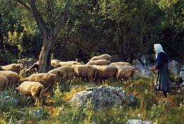 """ANIMAUX  L 9    """" MOUTON  /  BOUC  / CHEVRE  / GOAT  /   """"      CPM / CPSM  10 X 15 - Tierwelt & Fauna"""