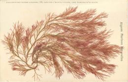 Algues Marines Naturelles  Lot De 30 Cartes éditeur Lucien Amiaud Les Sables D'olonne - Sables D'Olonne