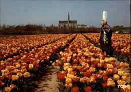 29 - SAINT-JEAN-TROLIMON - TRONOËN - Tulipes - Saint-Jean-Trolimon
