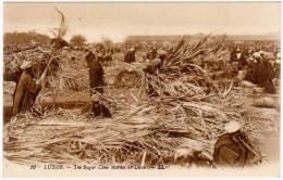 Egypte, Louxor ( Luxor ), The Sugar Cane Market - Louxor