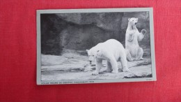 Polar Bears In Grotto Cincinnati Zoo ------- 1846 - Bears
