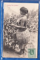 CEYLON TEA PLUCKER - Sri Lanka (Ceylon)
