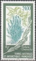 TAAF 1999 Yvert 244 Neuf ** Cote (2015) 12.00 Euro Flore Festuca Contracta - Neufs