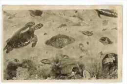 CPA 75 PARIS EXPOSITION COLONIALE 1931 LE PALAIS DE LA HOLLANDE LES MERVEILLES DE LA MER DES INDES - Exhibitions
