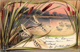 [DC4583] CARTOLINA - ILLUSTRATA - LIBELLULE - Viaggiata 1901 - Old Postcard - Animali