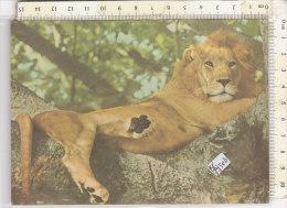 PO1950D# MOZAMBICO - LEONE   VG 1987 - Mozambico