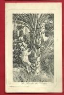 XBP-08  La Récolte De Dattes, ANIME. Circulé En 1909 - Non Classés