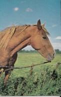 POSTCARD HORSE - Horses
