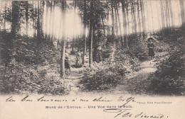 Mont De L'Enclus, Une Vue Dans Le Bois (pk19375) - Mont-de-l'Enclus