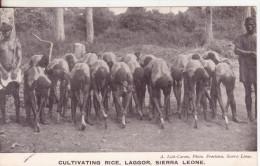 1-Mestieri Agricoli:coltivatori-Sierra Leone-v.1906 X Paris - Professions