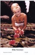 ELKE SOMMER - Film Star Pin Up - Publisher Swiftsure Postcards 2000 - Postcards