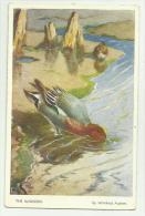 THE WIDGEON  (ANATRA) VALENTINE'S CARD NON VIAGGIATA F.P - Oiseaux