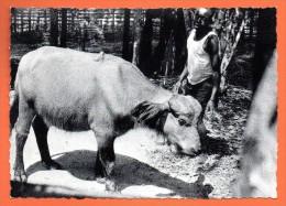 Congo Belge. Bison Roux . 1963 - Congo Belge - Autres