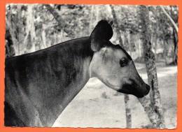 Congo Belge.Okapi. 1963 - Congo Belge - Autres