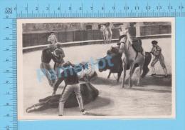 """CorridaTaureau (Real Photo Réelle,"""" Suerte De Veras. Una Caida Peligrosa """" ) Post Card Carte Postale 2 Scans - Corrida"""