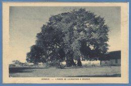 AFRIQUE - ZAMBEZE -- L'arbre De Livingstone - Zimbabwe