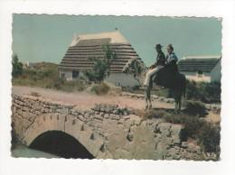Carte Postale EN CAMARGUE AVEC LES GARDIANS 1958 MAISON CAMARGAISE  CHEVAL PONT EN PIERRE - Saintes Maries De La Mer