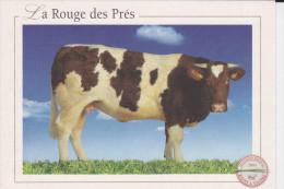 CPM VACHE LA ROUGE DES PRES RACES A VIANDE 2004 - Vaches