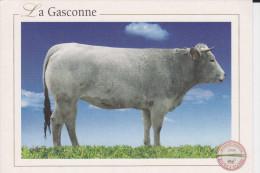 CPM VACHE LA GASCONNE RACES A VIANDE 2004 - Vaches