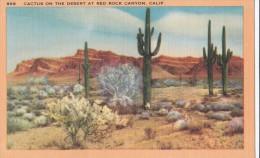 Carte Vers 1920 CACTUS ON THE DESERT AT RED ROCK CANYON,CALIF - Etats-Unis