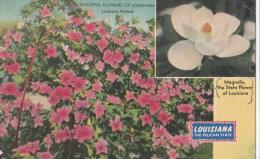 Carte Vers 1920 Beautiful Flowers Of Louisiana : Azaleas ,magnolia - Etats-Unis