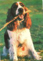 DOGS / HUNDE / CHIENS /  -    Postcard   Unused   ( P 1982 ) - Hunde