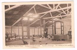 Mont-Saint-Guibert, Belgian Orphan Fund, Institut De Bierbais, Pavillon D'élevage - 2 Scans - Mont-Saint-Guibert