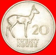 ★REEDBUCK: ZAMBIA★ 20 NGWEE 1968! LOW START ★ NO RESERVE! - Zambia
