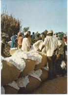 Koza Le Marché De Coton - Cameroun